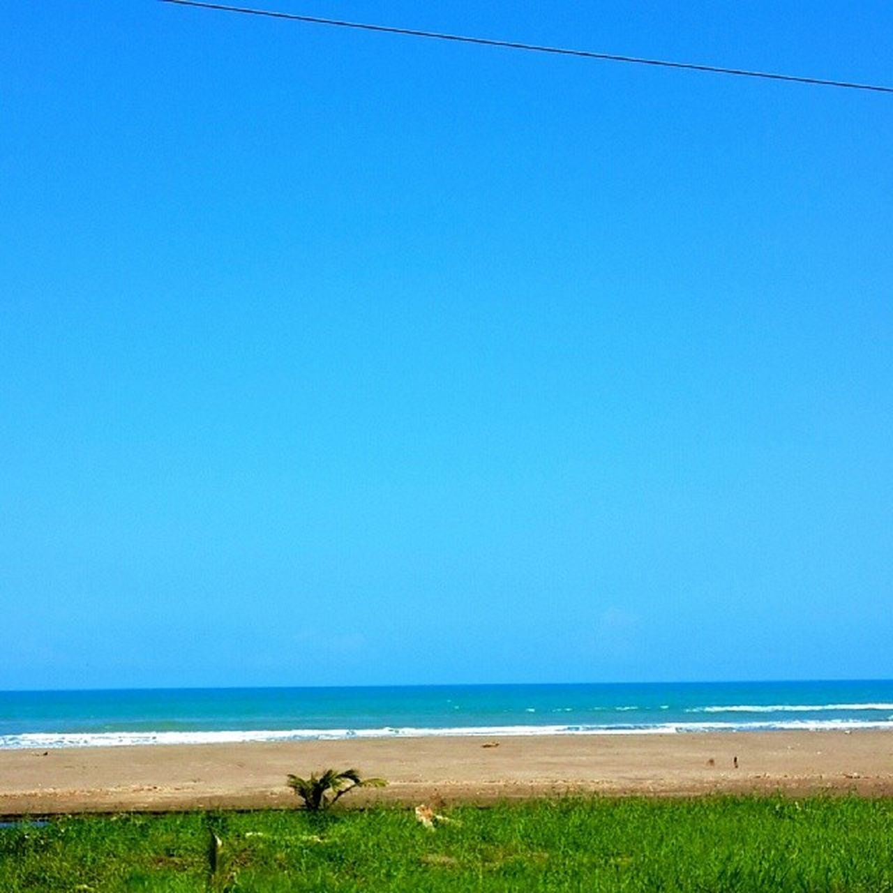 sea, horizon over water, copy space, water, beach, blue, nature, day, scenics, beauty in nature, one animal, outdoors, tranquil scene, clear sky, tranquility, sand, animal themes, animals in the wild, no people, sky, grass, bird, mammal
