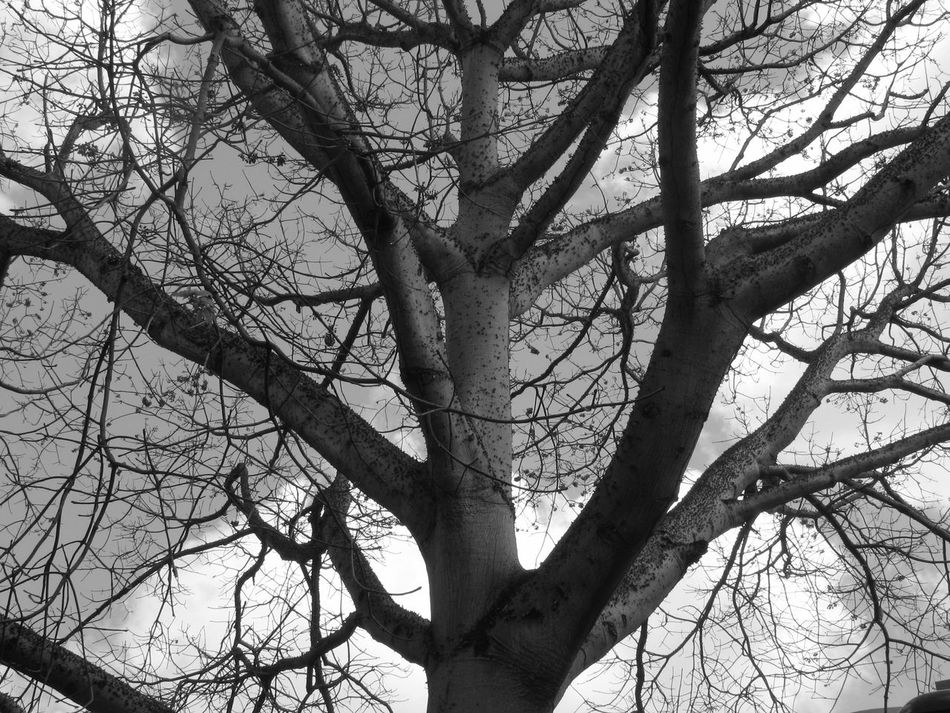 Tree Branch Bare Tree Tree Trunk Sky Nature Beauty In Nature Low Angle View Outdoors No People Tranquility Day Close-up