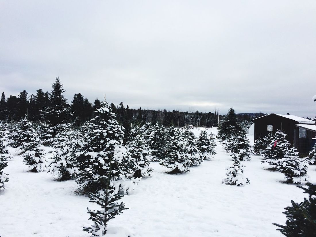 Christmas Trees for days....where oh where did my warm weather go??? Winter Snow Cold Temperature Tree Nature Tranquil Scene Weather Tranquility Beauty In Nature Scenics No People Outdoors Day House Sky Landscape Built Structure Building Exterior Architecture