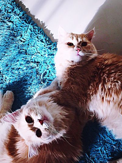 Glitch Cats Check This Out Pet Pets Cute Taking Photos Capture The Moment Animals Random ♡