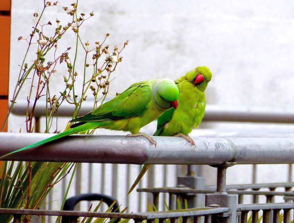 Beautiful stock photos of süße pärchen, Animal Themes, Animal Wildlife, Animals In The Wild, Beauty In Nature