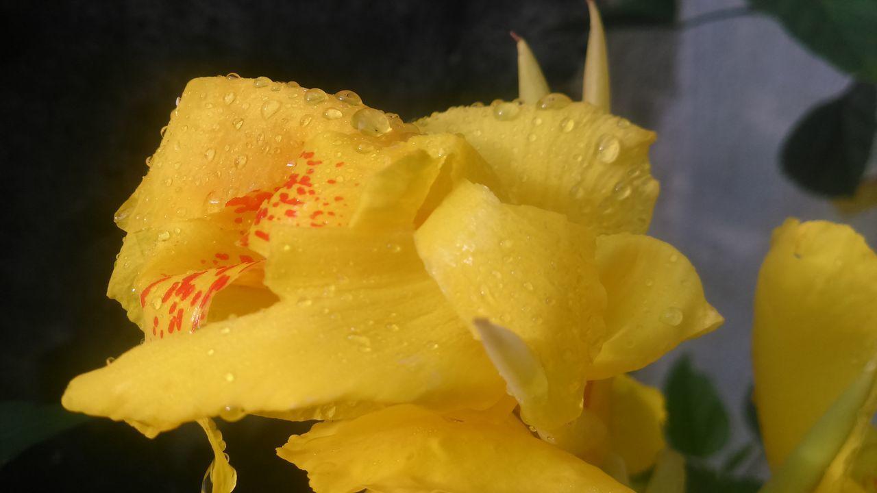 Depois da chuva. Gotas Da Chuva Flores First Eyeem Photo