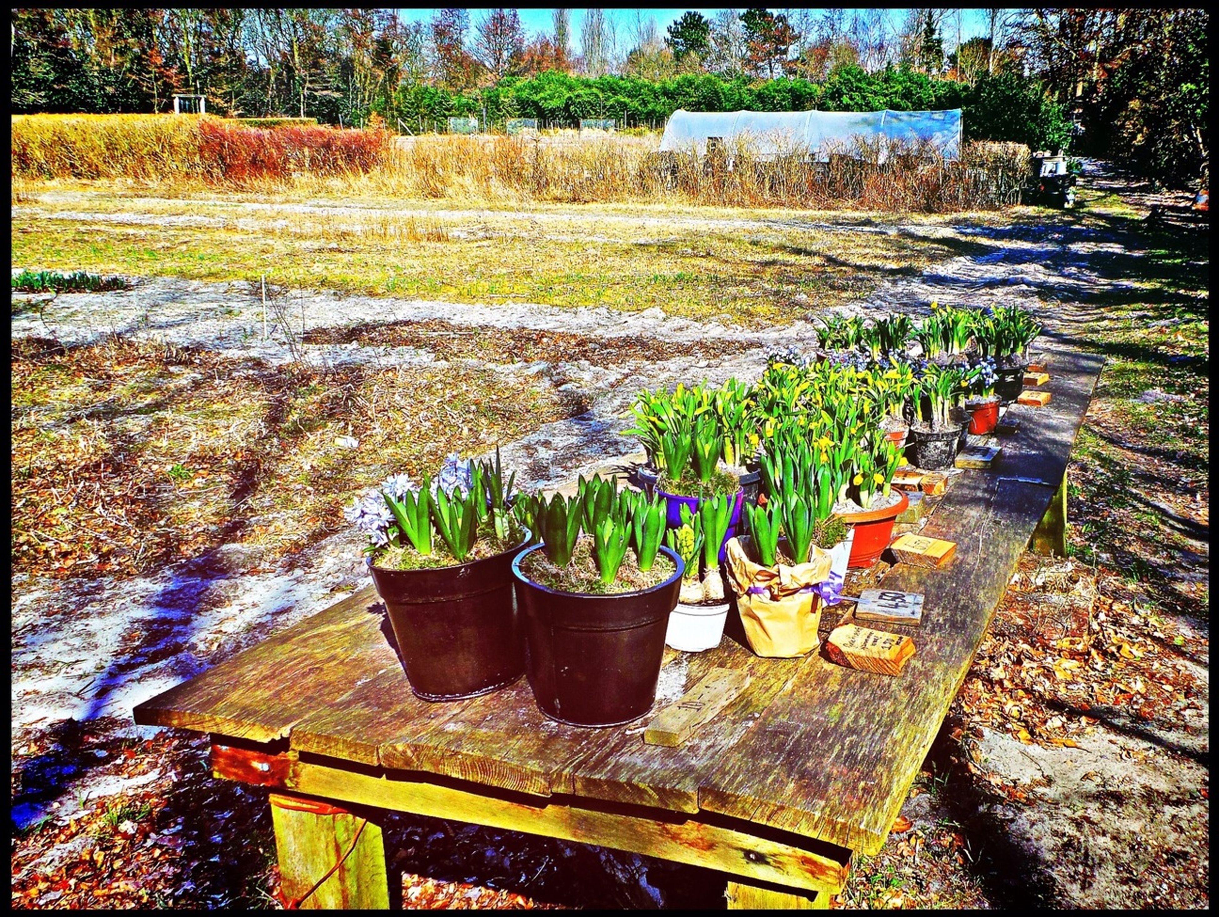 transfer print, auto post production filter, plant, growth, leaf, green color, potted plant, nature, day, high angle view, outdoors, stone - object, flower, sunlight, no people, abundance, tranquility, formal garden, footpath, large group of objects