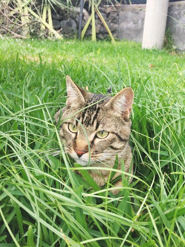 Wild 🐱🌿 Cat Gatto Gattotigrato Pets Garden