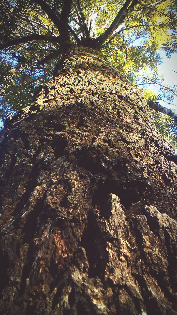 tree, low angle view, tree trunk, nature, day, textured, no people, forest, growth, branch, outdoors, beauty in nature, sky