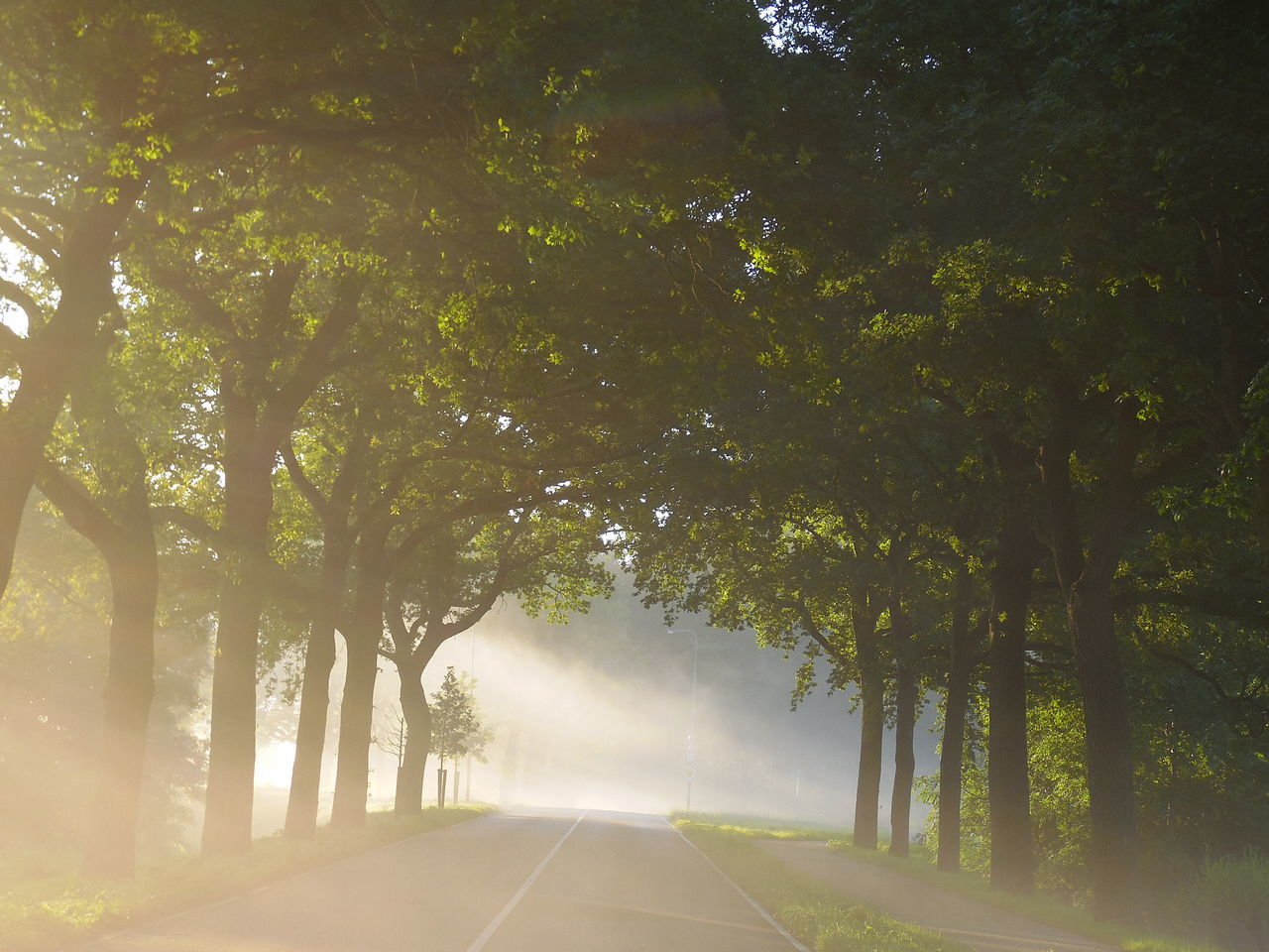 Misty Morning Misty Mornings Morning Light Misty Sunrise Misty Morning Fog Beautiful Time For Nature Country Road Outdoors Photography Beauty In Nature Beautiful Scenery Eyem Best Photo Bestoftheday Eyemcaptured Capture The Moment Dutch Landscapes Nature At Its Finest Popular Photos Urban Nature Best EyeEm Shot Sunrays Sunrays Through The Branches Sunrays Through The Leaves Dutch Countyside Dutch Countryside