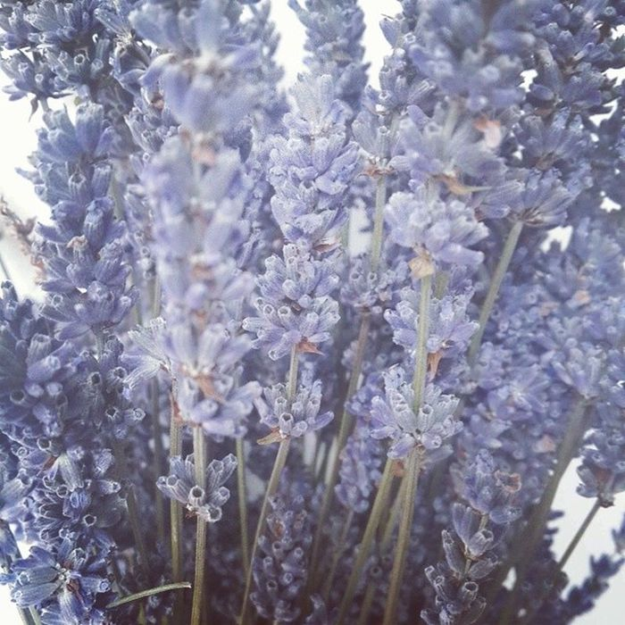 Dried lavender @crownflora Always I was thinking that I wanna buy it someday. Today is...that day! Thank you nayoung unni♡ Dryflower Lavender Gift Sunday crownflorastudio scent calm sleepy