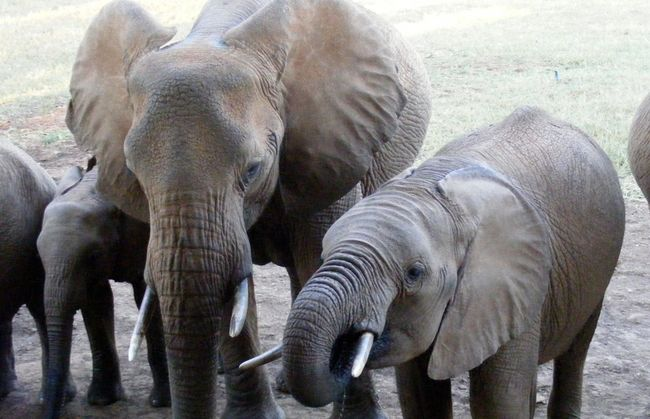 Young Elephant Family At Water Hole Elephant Photography EyeEm Nature Lover The Art Of Photography Landscape #Nature #photography Elephant Eye4photography