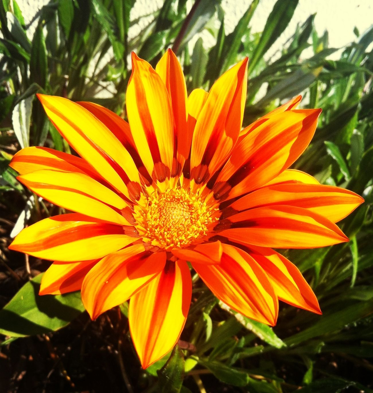 Flower Sunshine Enjoying The Sun Relaxing First Eyeem Photo