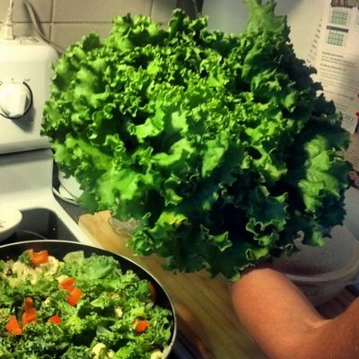 Freshgreens for a seriously Healthy meal Myarm Takingpicturesoflettuceislame but its sobig and green :-)
