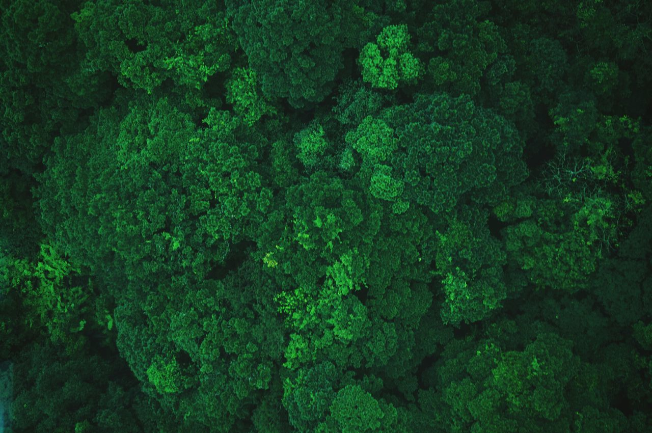 Beautiful stock photos of texture, Backgrounds, Day, Directly Above, Forest