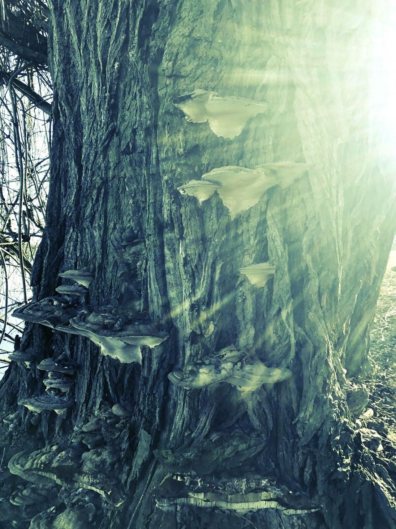 Tree Beauty In Nature Nature Baumstamm Tree Trunk Wald Pilze Fantasy Magical Magic Elf Elf Fantasy Fair Elfenbaum Sunlight Scenics EyEmNature Mysterious EyeEmNewHere