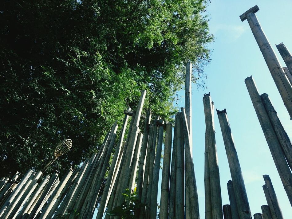 Tree Bamboo Bamboo Art Bamboodesign Bamboo - Material Wall Bamboo Wall Bamboos Nature Natural Pattern Nature Wall