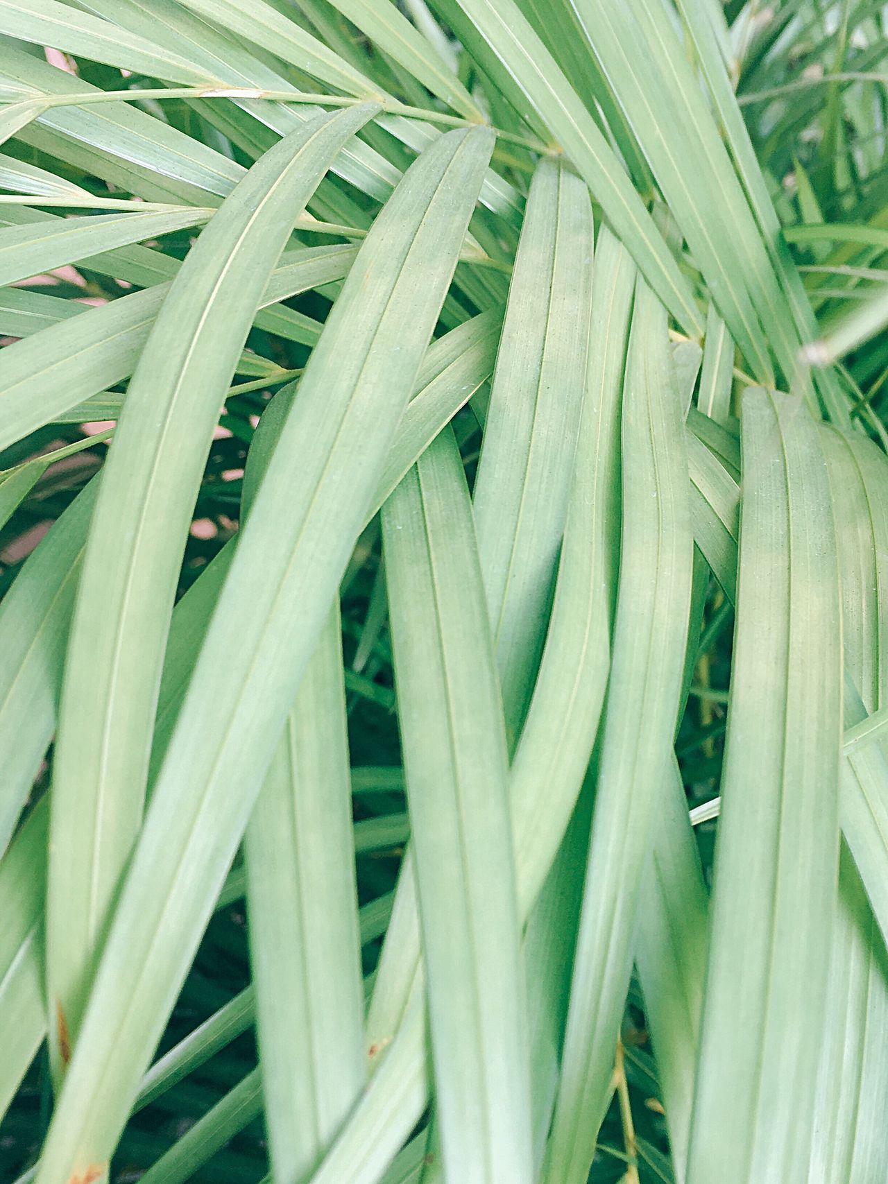 Plant Growth Backgrounds Green Color Close-up No People Full Frame Nature Outdoors Day Freshness Eyeem Philippines