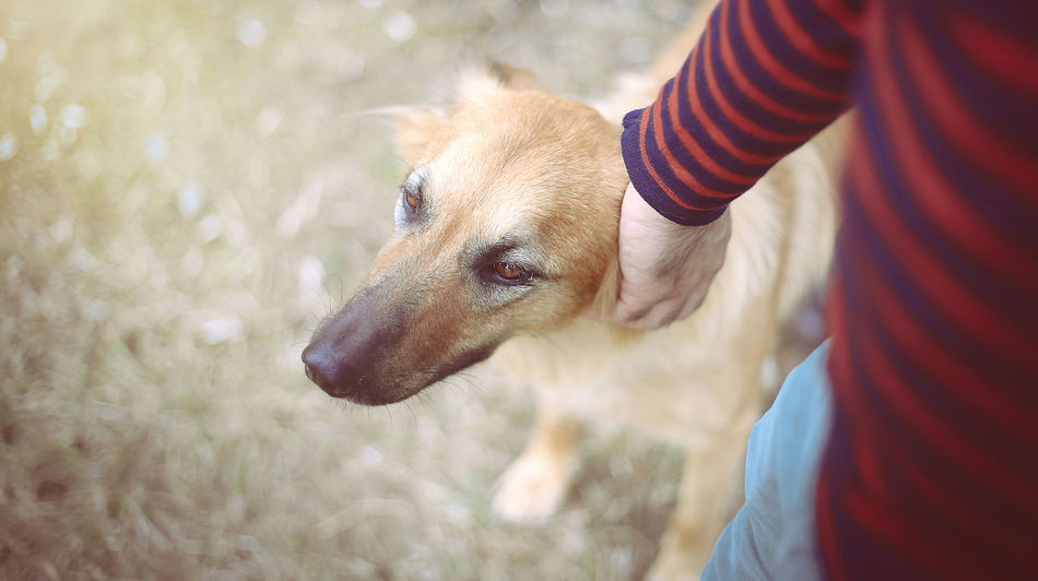 Animal Animal Head  Animal Nose Animal Themes Brown Close-up Day Dog Domestic Animals Emotions Captured Emotions Of The Eyes Focus On Foreground Friendship Goodnight Everyone!  Mammal No People One Animal Outdoors Part Of Pets