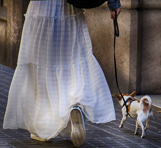 a paeceful walk with dog Animal Themes Day Dog Friendship Human Body Part Human Leg Legs Legs Woma And Dog Legs_only Long Skirt One Animal One Person Outdoors Peace Peaceful Pets Real People Standing Steps Stillness In Motion Street Urban Walk White Dress Women