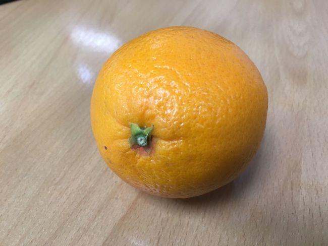 Orange Fruits ♡ Fruit Bowl