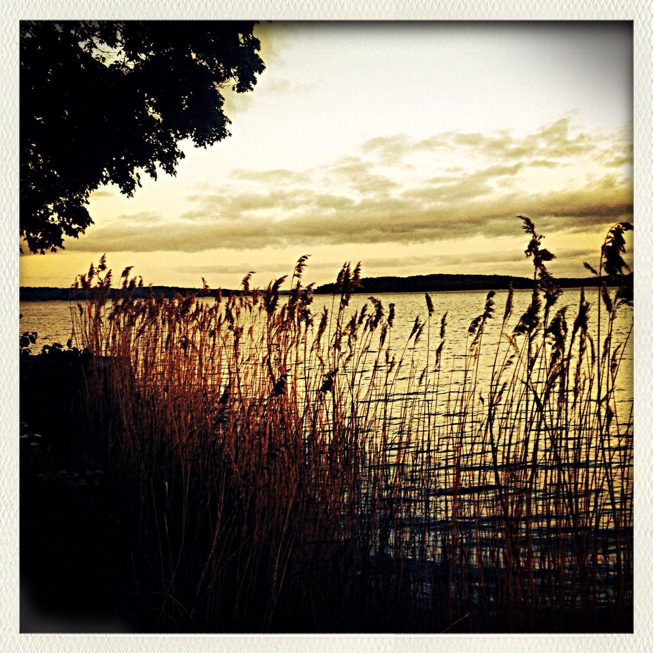 Spring Gripsholm Water Reflection Water
