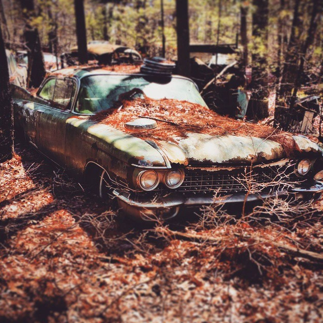 """nature always wears the colors of the spirit"" - ralph waldo emerson Old Cars Junking Urbanexploration Adventure Oldbutnotforgotten Tiltshift Vintage Cars Gorgeous Eyeemphotography Photooftheday Eye4photography"