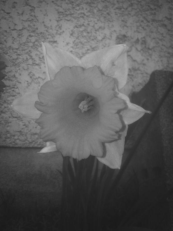 Fleur Jonquille Taking Photos