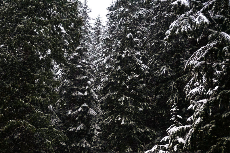 Tree Nature Low Angle View Growth Beauty In Nature No People Sky Tranquility Scenics Outdoors Day Snow Tranquility Beauty In Nature