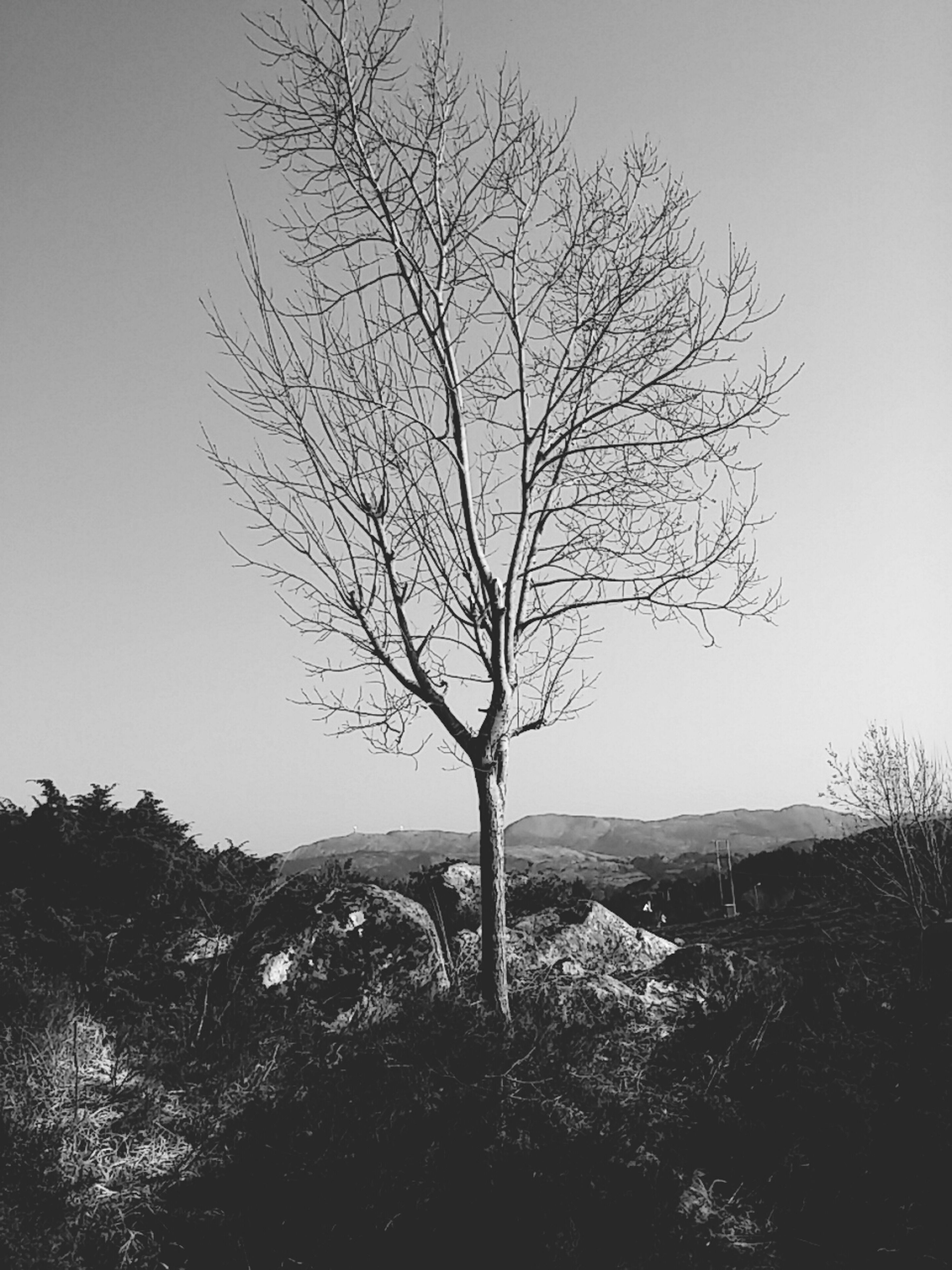 tree, bare tree, tranquility, tranquil scene, landscape, branch, scenics, clear sky, nature, beauty in nature, non-urban scene, tree trunk, field, remote, sky, mountain, growth, silhouette, idyllic, solitude