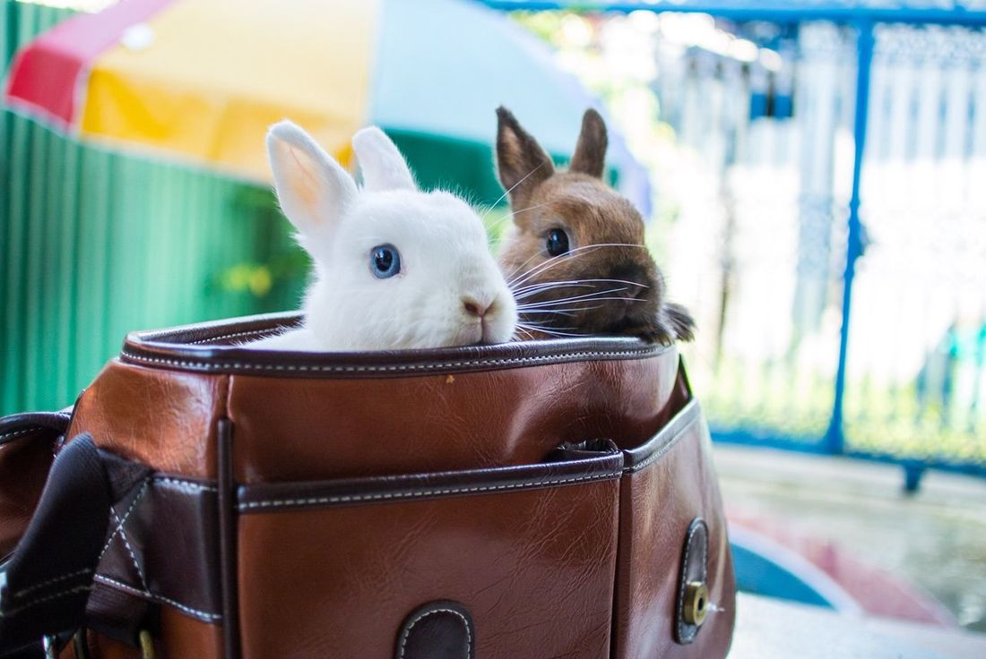 Enjoying Life Inmybag Rabbit Playing With The Animals