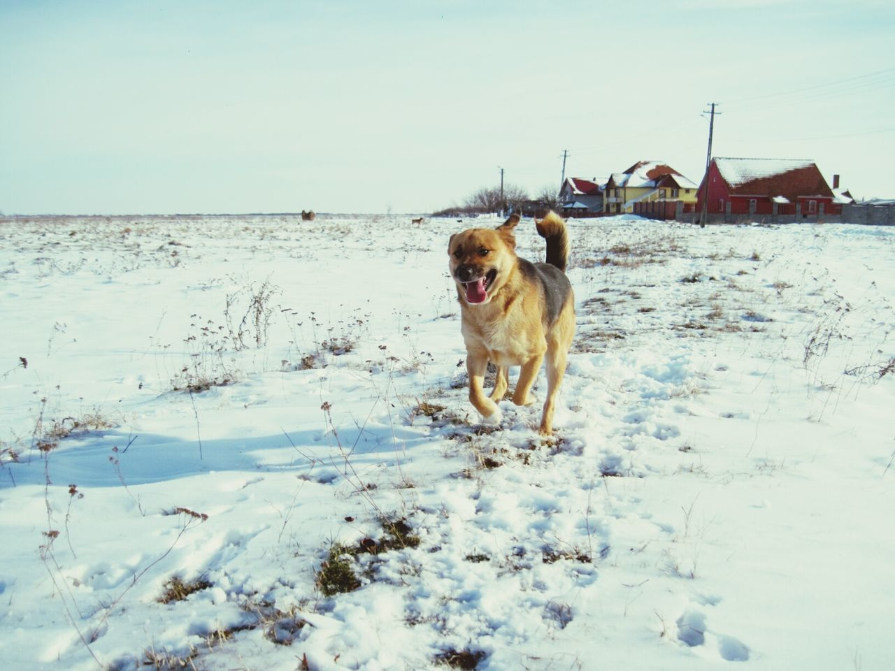 Snow Winter Cold Temperature Pets Dog Animal Themes Domestic Animals No People Outdoors One Animal Nature Day Running Dog Funny Faces Funny Dog Face Funny Dog