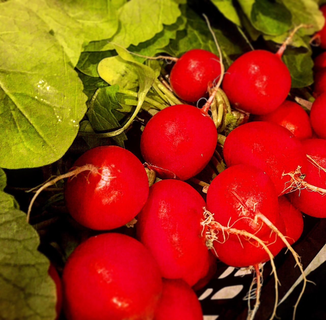 Radish Red Healthy Eating Freshness Close-up Green Color Red And Green Red Winter Who Said Winters Are Dull? Market