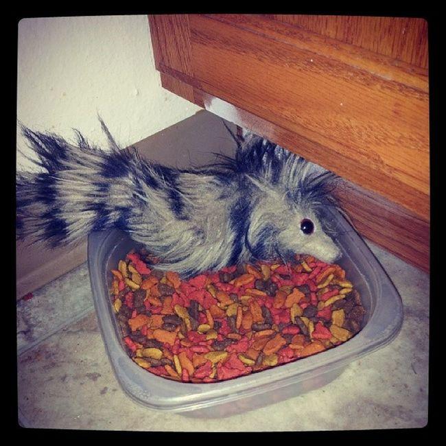 AryaKitty has to have her Woobie in her food bowl to eat.... Sillykitty Instafame instagood kittyporn catsofinstagram Arya arya AryasPrayer WhatDoWeSayToDeath ? NotToday !