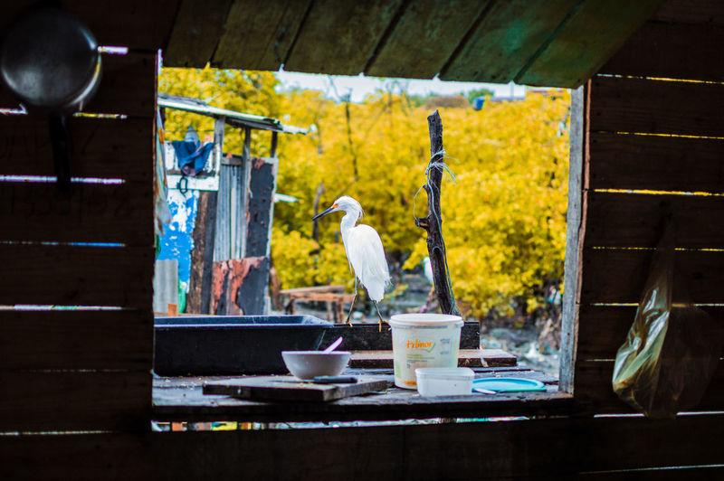 #animal Portrait #animals #animal #pets #birds #wildlife #wild #cityscape #landscape #nature #sunset #lake #vacation #trip #city #downtown #reflectio #animals #nature #swans #aves #portrait #portrait #eyemphotography #eyem #nature Lovers #eyem Gallery #The Portraitist - 2015 EyeEm Awards Portrait Of A Woman #portrait #portraits #moodygrams #portraits_ig #portraitphotography #portrait_perfection #moodyports #snowisblack #portraitphotographer #portraitgame #portrait_shots #bleachmyfilm #portraitmood #featurepalette #ftmedd 🇹🇳 #portraitphotography #portraits #portraiture
