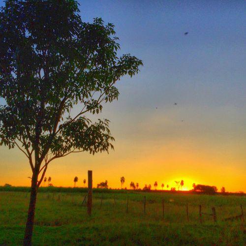 Avare SP BRASIL ☀️🐎🇧🇷 HDR Sunset #sun #clouds #skylovers #sky #nature #beautifulinnature #naturalbeauty #photography #landscape EyeEm Gallery The Traveler - 2015 EyeEm Awards My Smartphone Life EyeEm Best Shots EyeEm EyeEmBestPics EyeEmBestEdits Avare Heaven