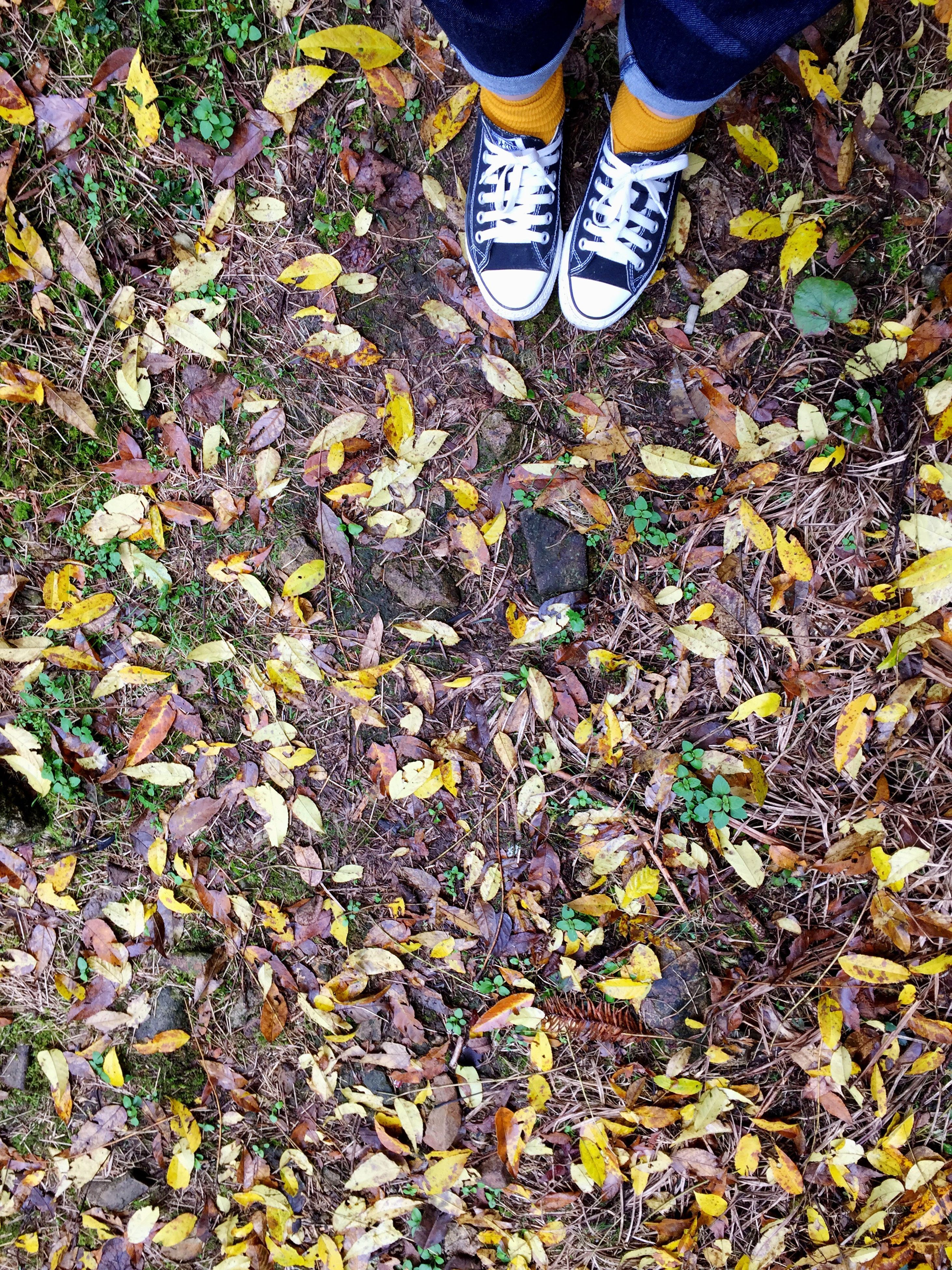 backgrounds, full frame, pattern, no people, high angle view, multi colored, close-up, textured, day, outdoors, nature