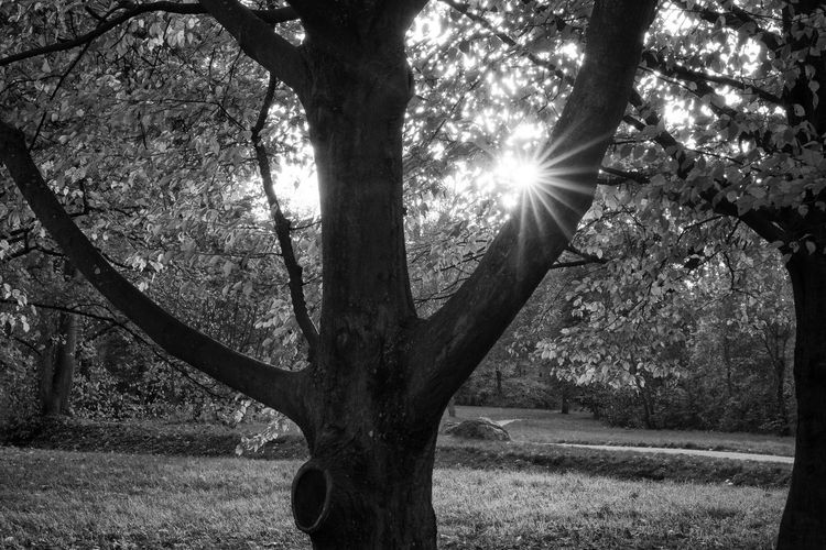 Beauty In Nature Blackandwhite Blendenstern Branch Day Monochrome Nature No People Outdoors Scenics Schwarzweiß Sun Tranquility Tree Tree Trunk