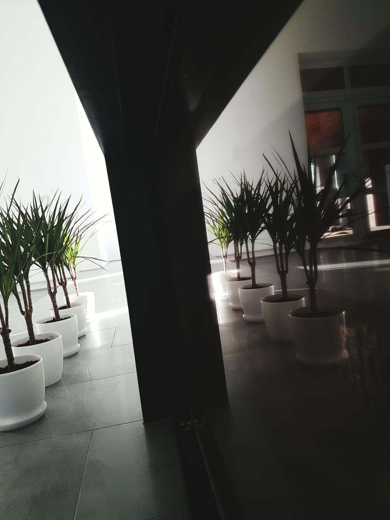 Green Shadow Lounge 5