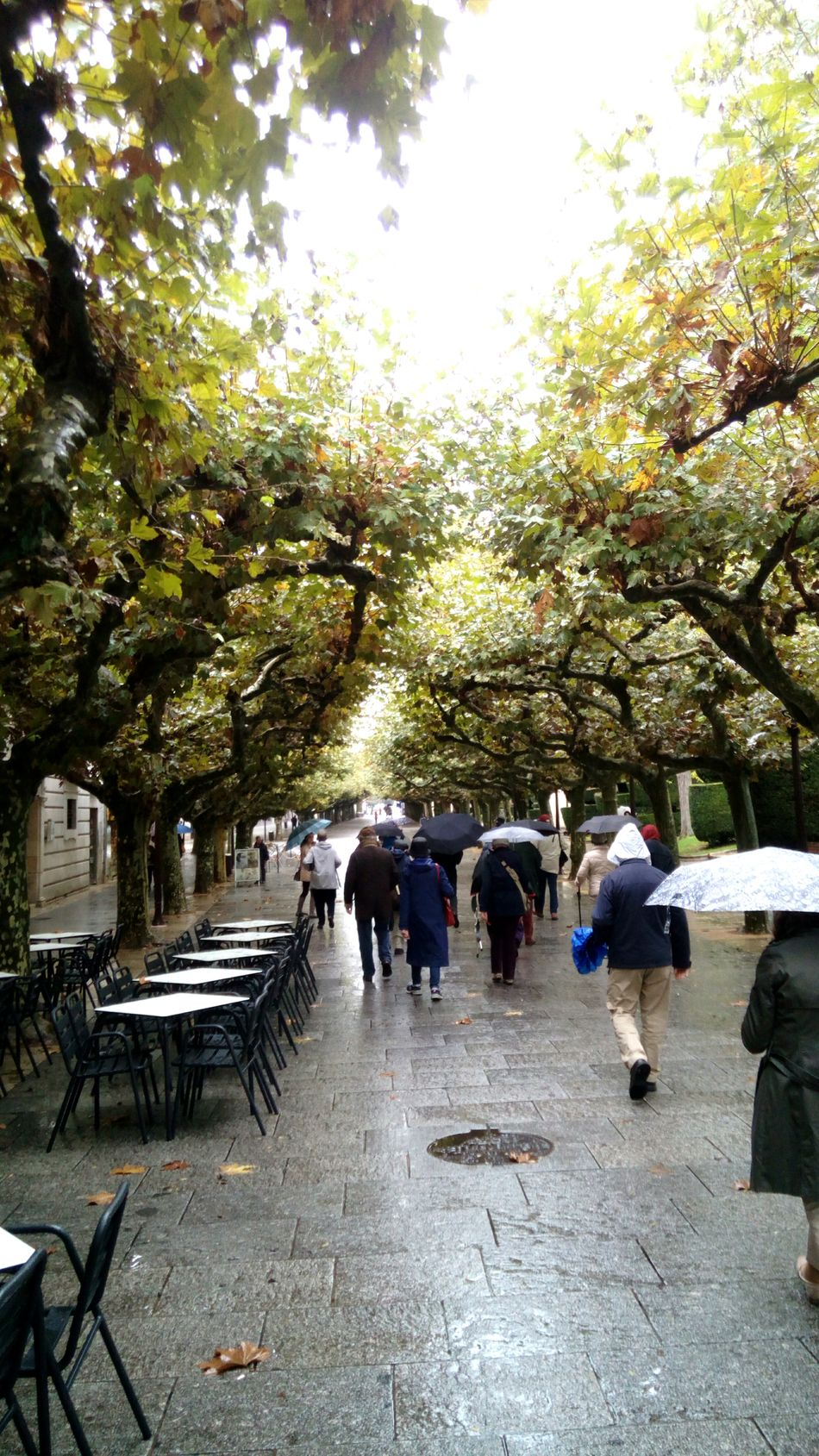 Tree Real People Outdoors People Day Large Group Of People Burgos Rain Rainy Days Walking Espolon Adapted To The City TCPM