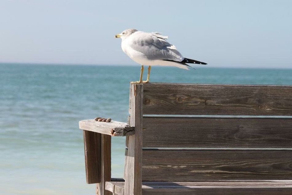 Bird Sea Animal Themes Animal Wildlife One Animal Seagull Animals In The Wild Wood - Material Perching Focus On Foreground Nature Outdoors Day No People Sky Horizon Over Water Sea Bird Water Black-headed Gull Scenics