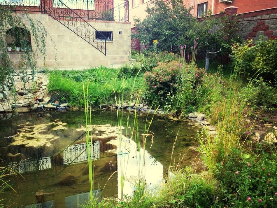 Красный пахарь In My Garden Nature Flovers♥