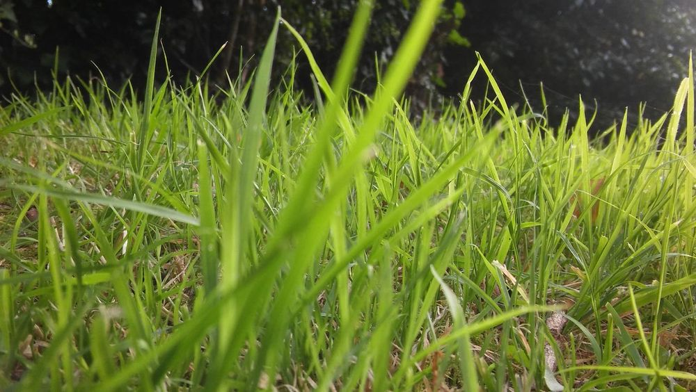 Growth Green Color Close-up Day Beauty In Nature Tranquility Green Nature Field Plant Grass Outdoors Scenics