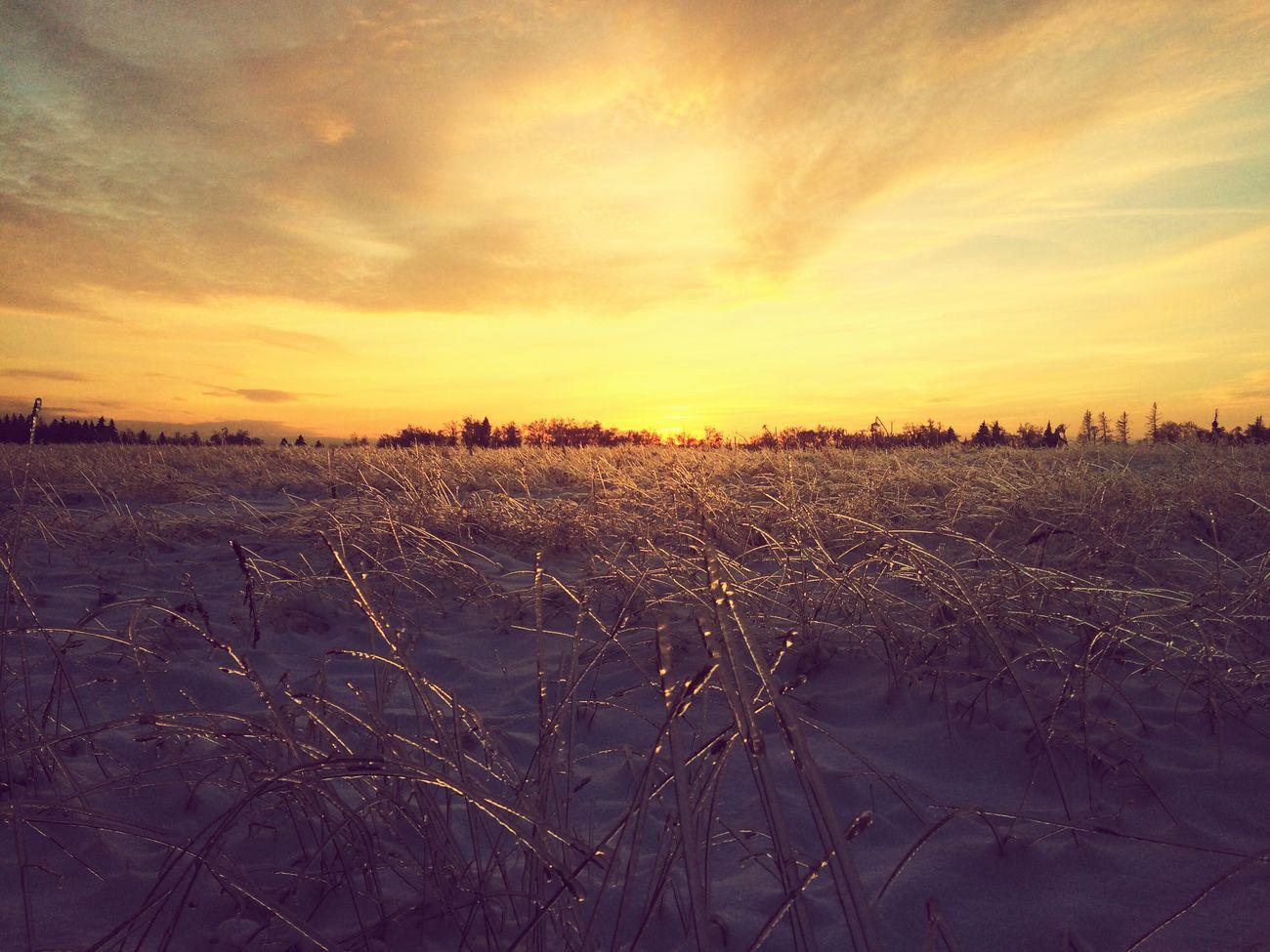 Звенигород поле