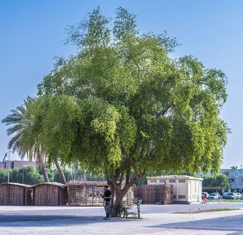 What I Value Tree Shade Shelter Heat Globalwarming Letsplanttree PlantTrees Plantography Bluesky