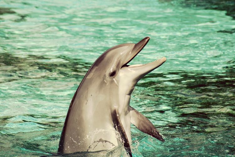 Dolphin Found On The Roll