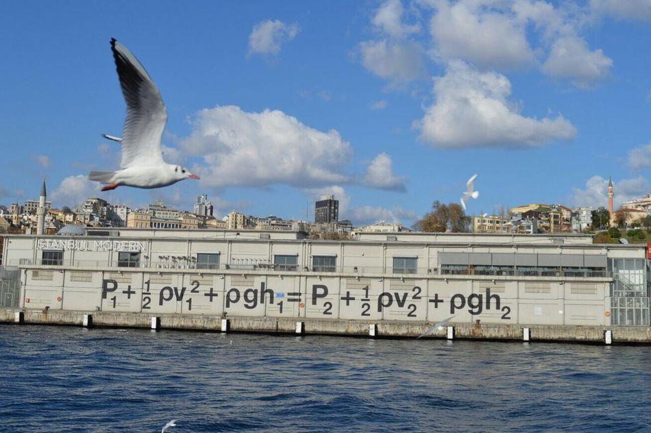Modernart Istanbulmodern Pythagoras Martı Istanbul Nikon Nikonphotography Ship Tour Sea VSCO Vscocam