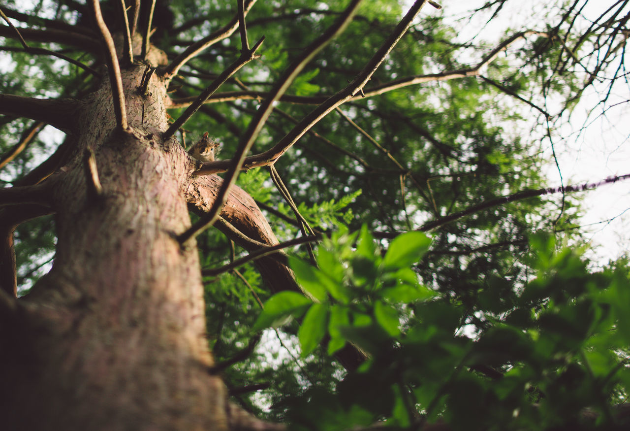 tree, nature, branch, day, green color, tree trunk, low angle view, outdoors, no people, beauty in nature, growth, close-up, animal themes