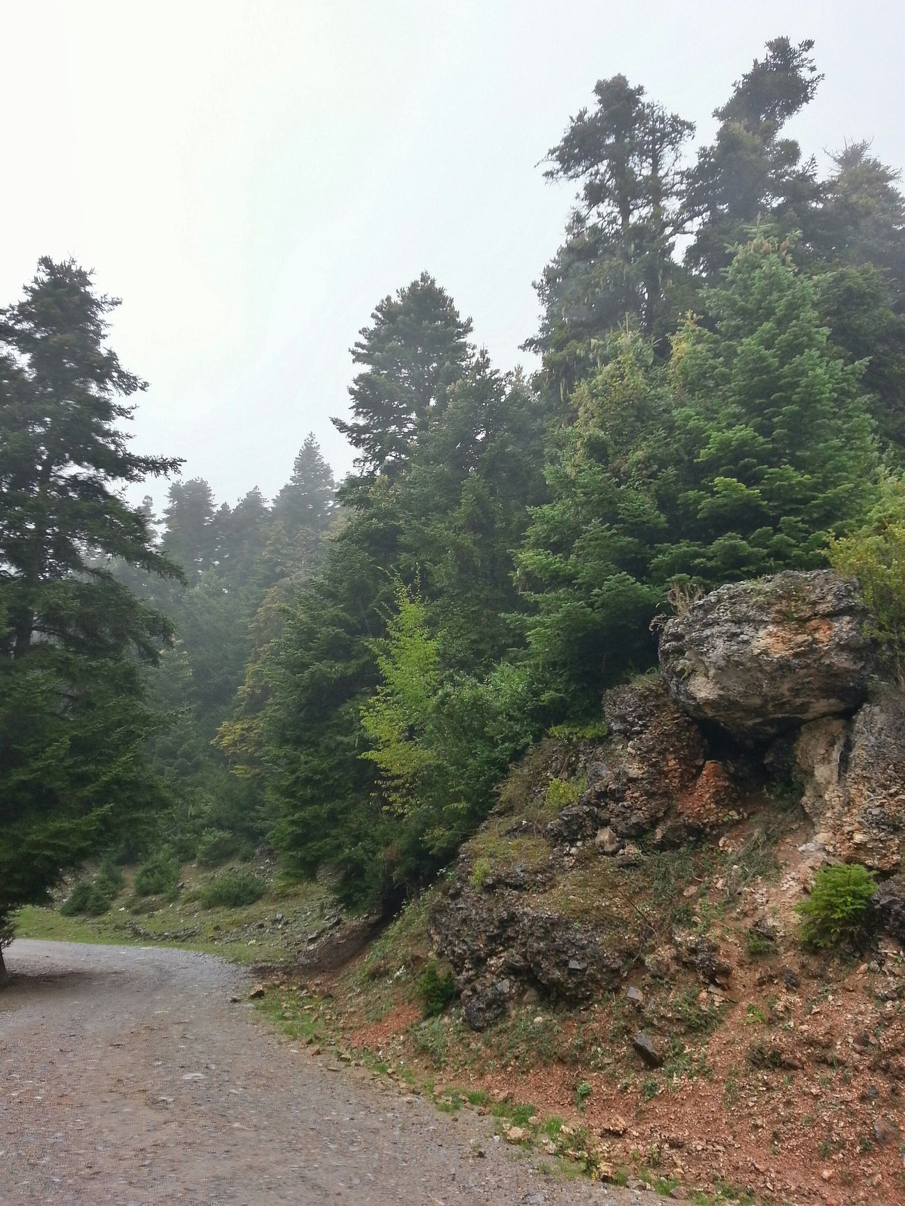 Olymp Mountain Mountain View Mist Conifers Forest