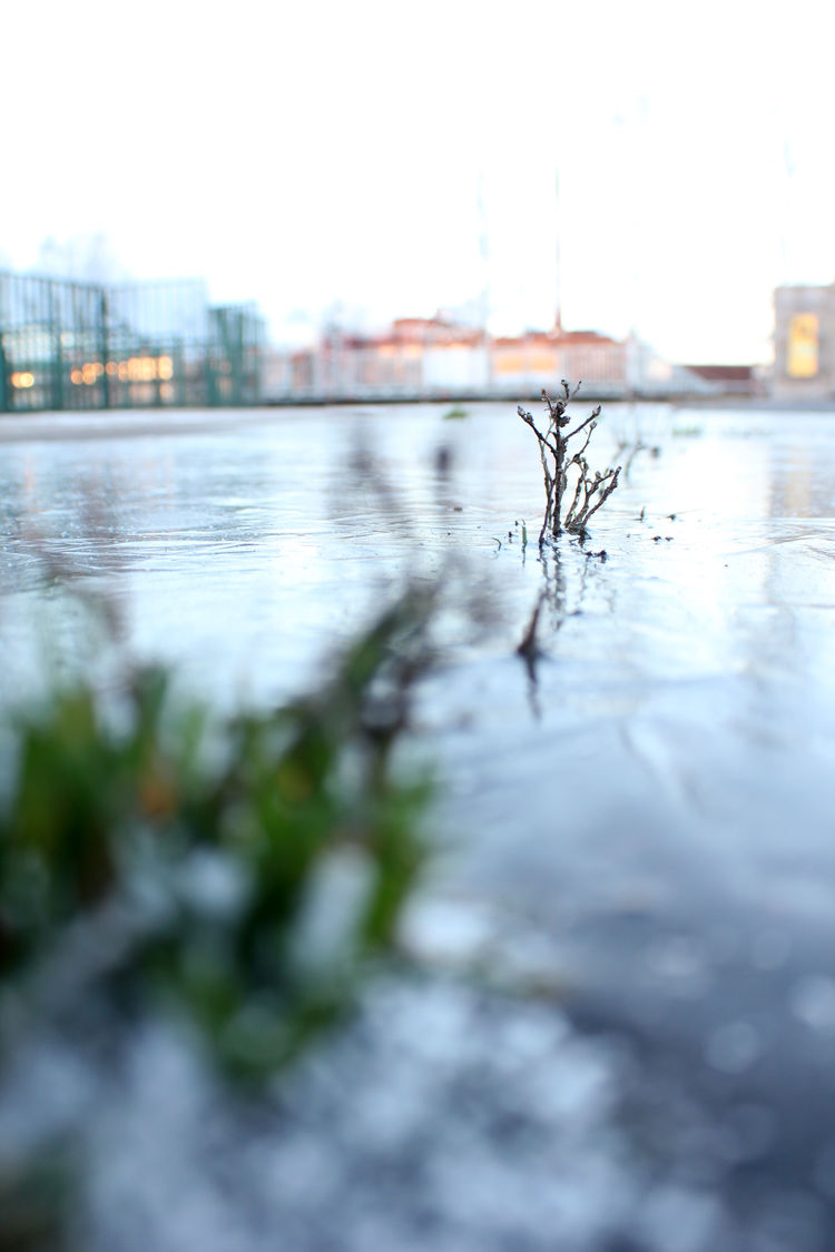 This is grass trying hard! Adapt Adapted To The City Buildings City Frozen Grass Green Ground Grow Growing Ice Jaa Jäässä Kaupunki Luonto Mukautua Nature No People Outdoors Ratina Ruoho Snow Try Winter Water