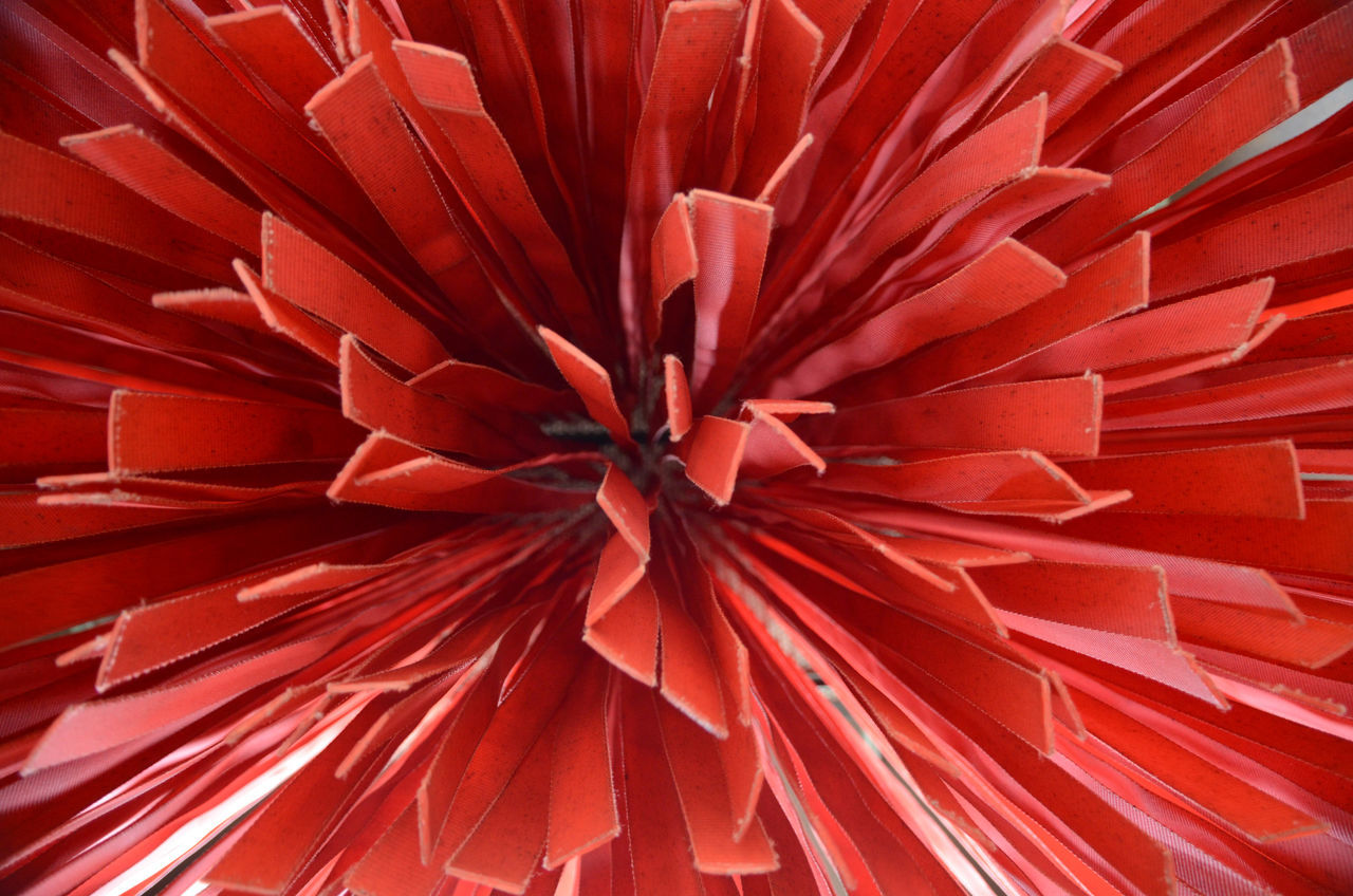 red, flower, full frame, backgrounds, no people, close-up, petal, fragility, flower head, day, growth, nature, indoors, beauty in nature, freshness