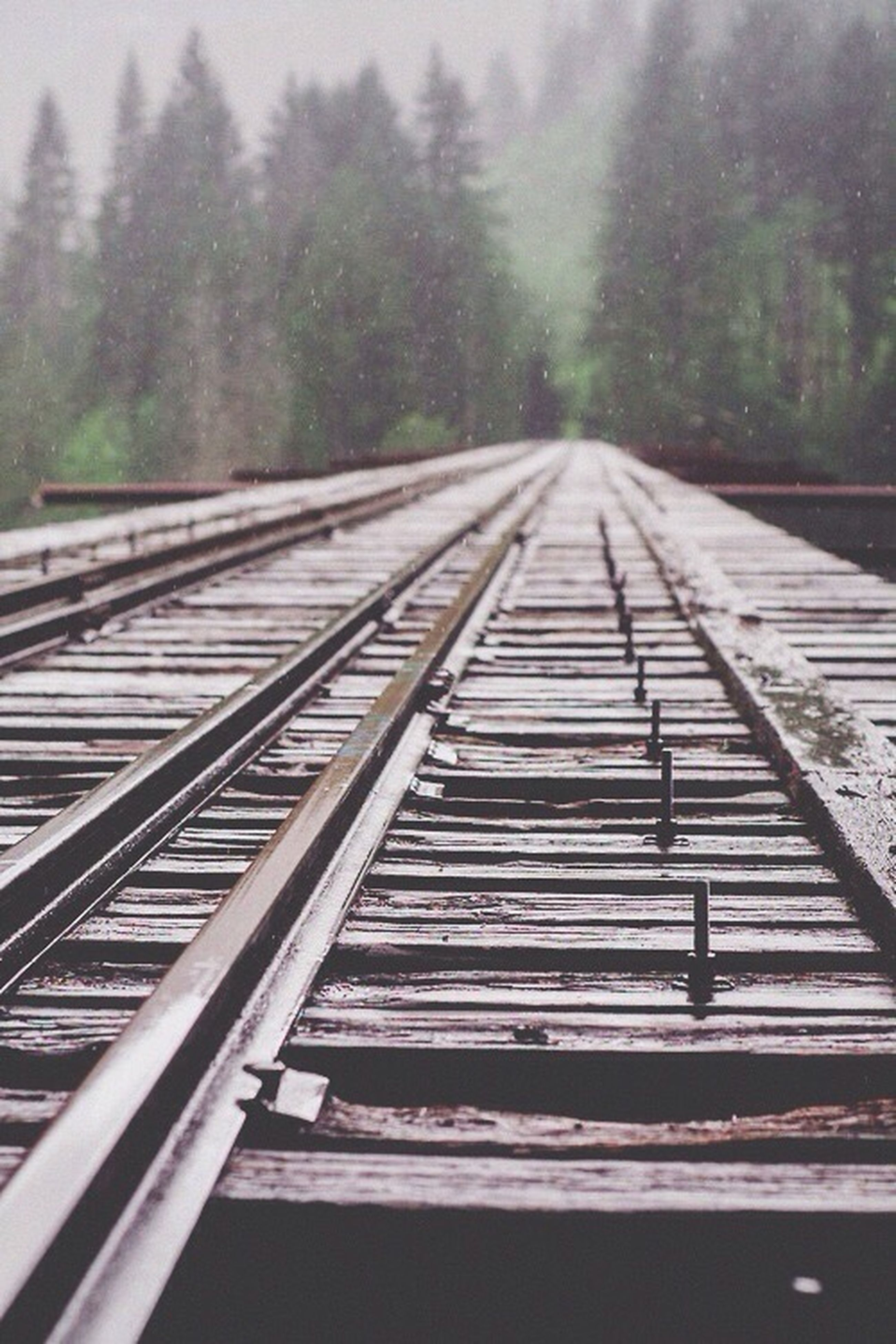 the way forward, diminishing perspective, tree, railroad track, vanishing point, transportation, rail transportation, railing, long, connection, straight, forest, sky, day, no people, surface level, outdoors, tranquility, nature, railway track
