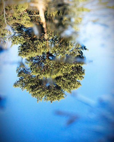 Nature No People Close-up Growth Outdoors Water Day Tree Beauty In Nature Sky Ice Winter Cold Temperature Tree Nature Reflecting Water Reflecting Surfaces Reflecting Clouds Reflecting Pools Reflecting Colors Reflecting In Water Reflecting Sky