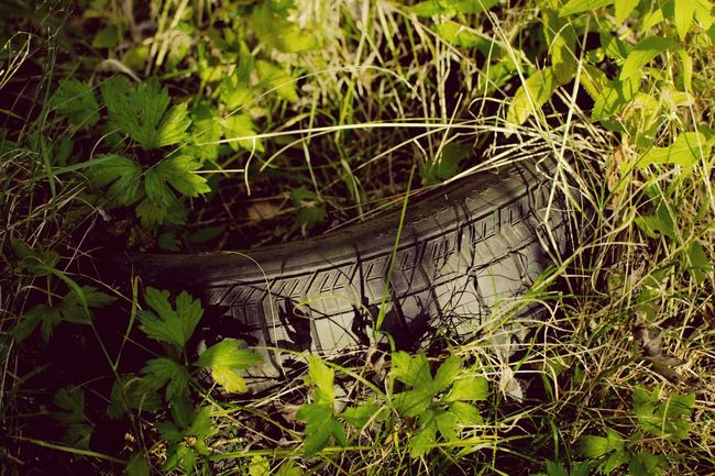 TakeoverContrast Plant Growth Green Color Green Nature Obsolete Growing Day Outdoors Tyre Overgrown